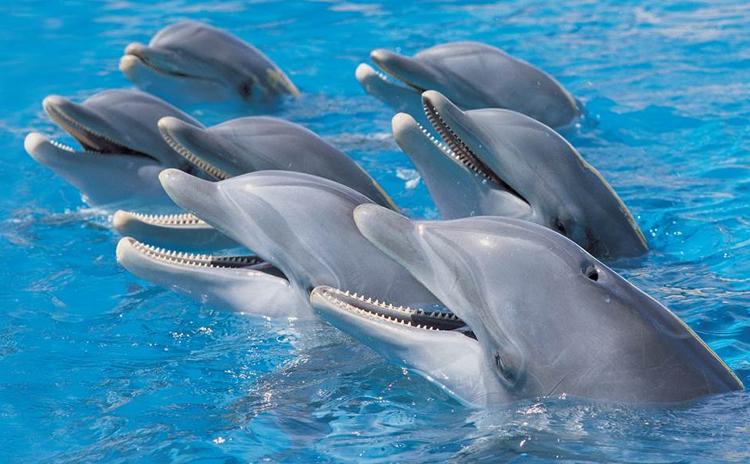 Delfinki